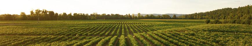 Sélection de vin rouge: AOC Puisseguin Saint-Emilion